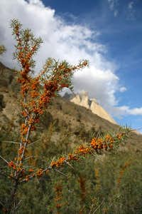 Wild Tree & High Mountains, Baltoro, Karakoram, Pakistan