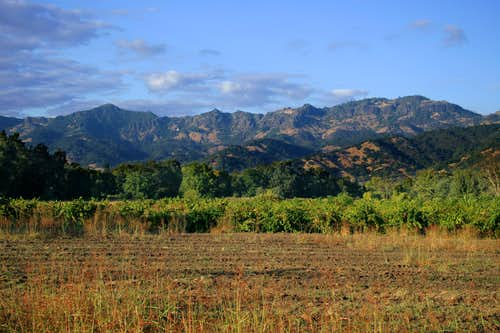 Palisades (Napa Valley)