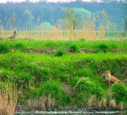 Animals in Karkonosze...
