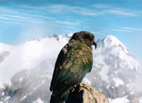 A true alpinist...