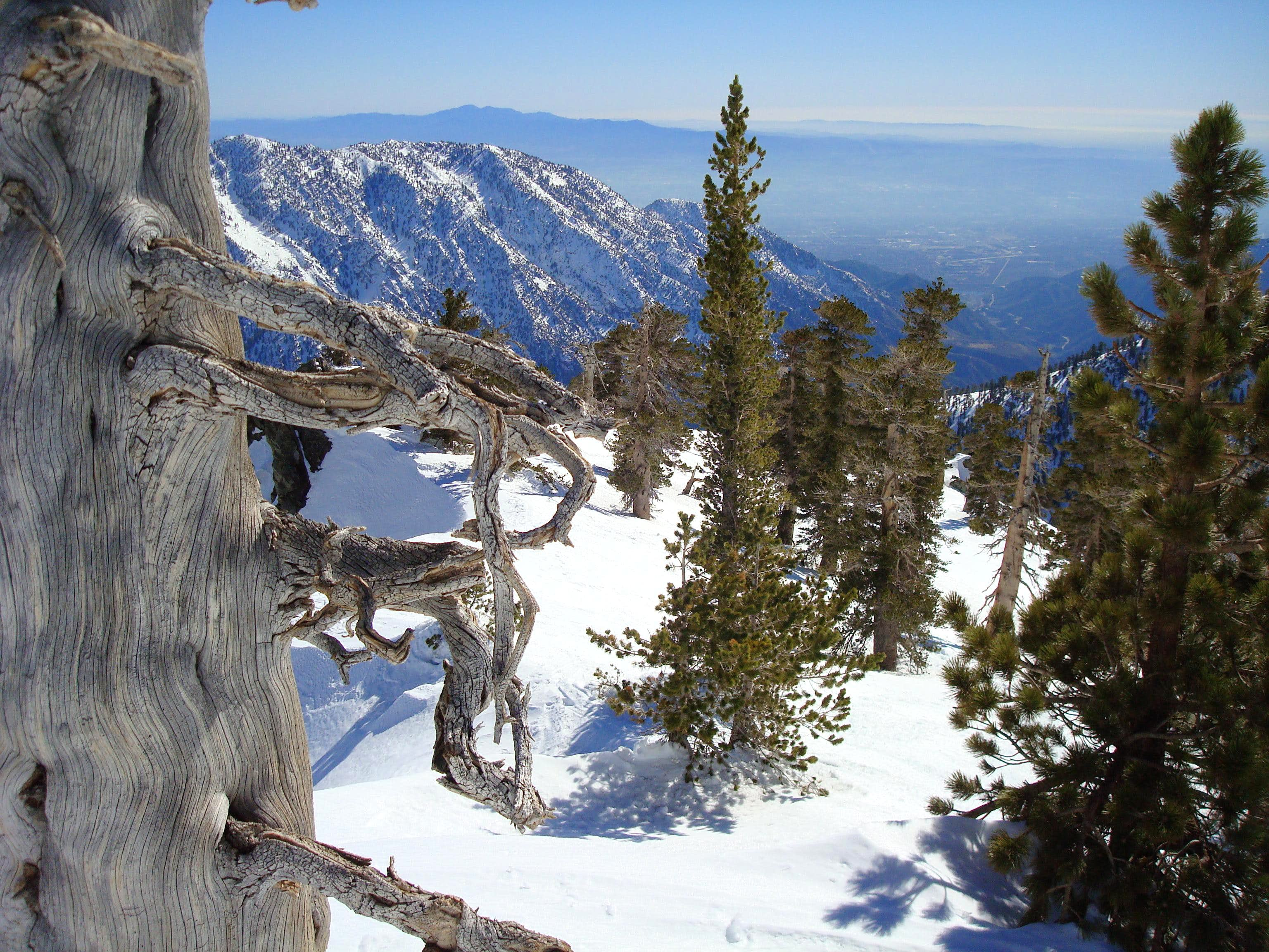 Mount Baldy, Feb. 9th 2008