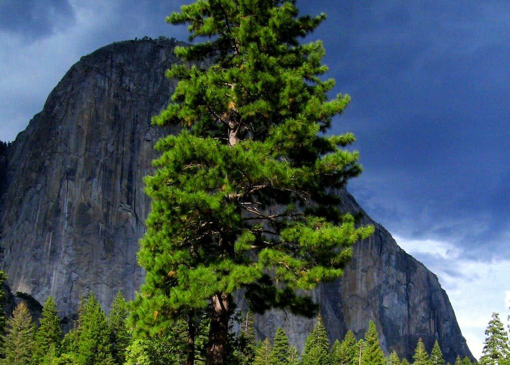 Tree, El Capitan & Dark clouds