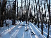 Sunlight through the trees on Cuyamaca Peak
