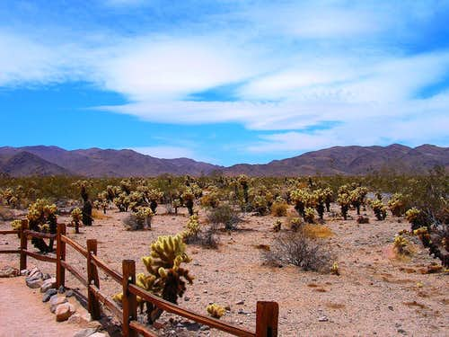 Adventures in Joshua Tree National Park