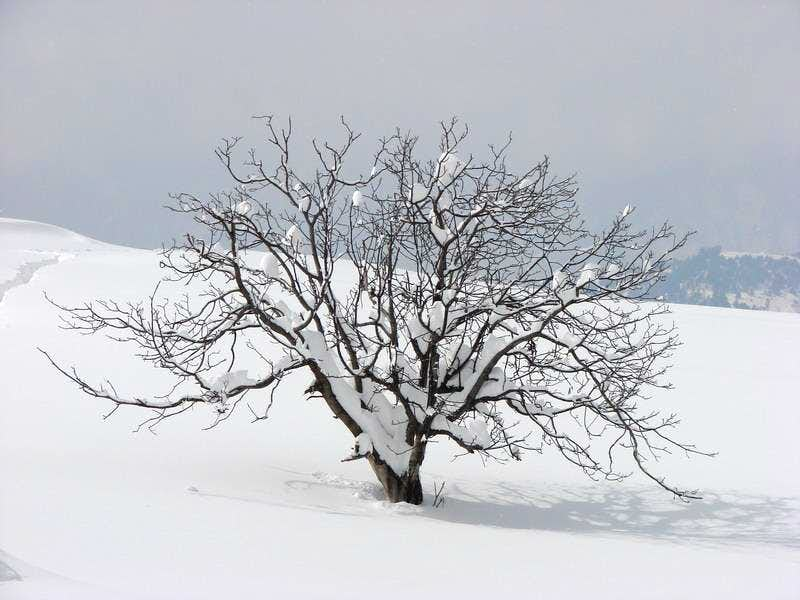 Kaghan valley in winter 2008