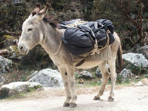 "Our ""burro"" on the way to the..."