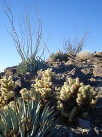 More cacti on the descent