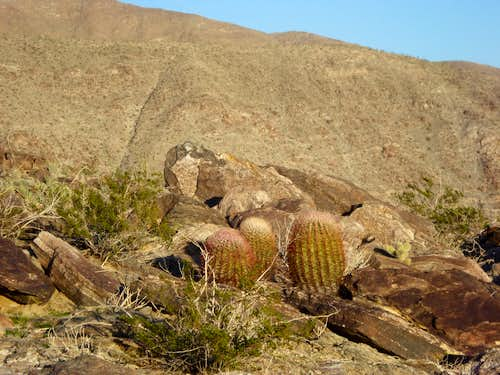 Barrel and Ocotillo on descent from Villager Peak