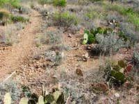 Bull Snake along the Dodson Trail