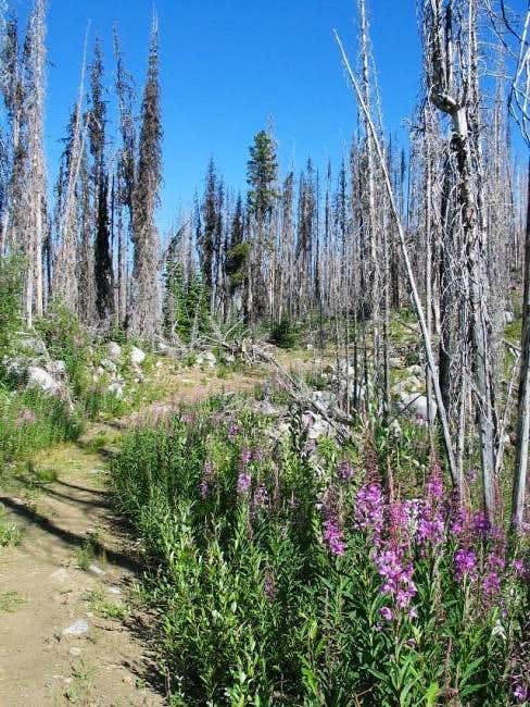 The Copper Butte trail...