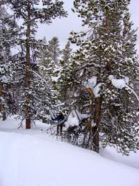 Open woods on the slopes above Broad Canyon