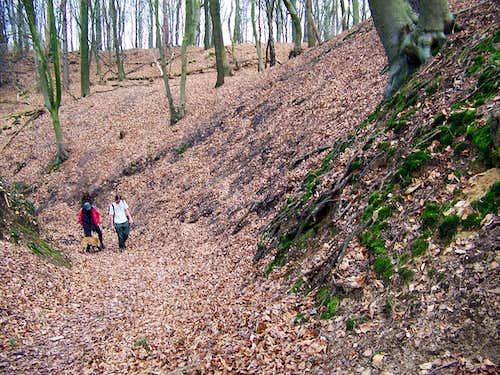 Woodlands outside Nijmegen