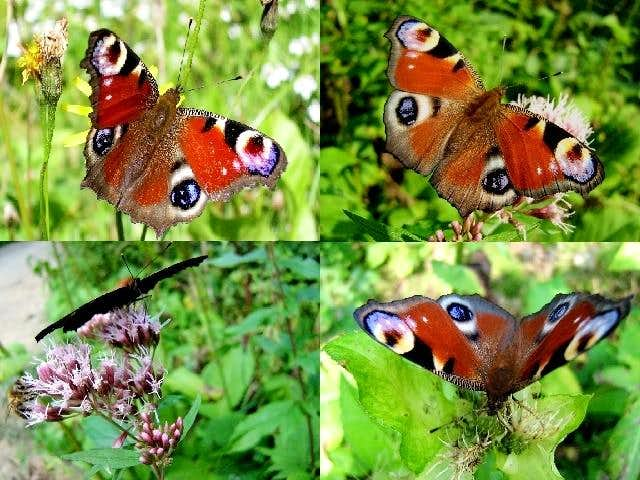 Butterflies and moths on my photos