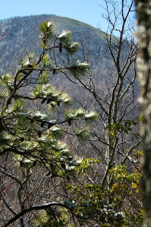 Pine Branch against Bull Head