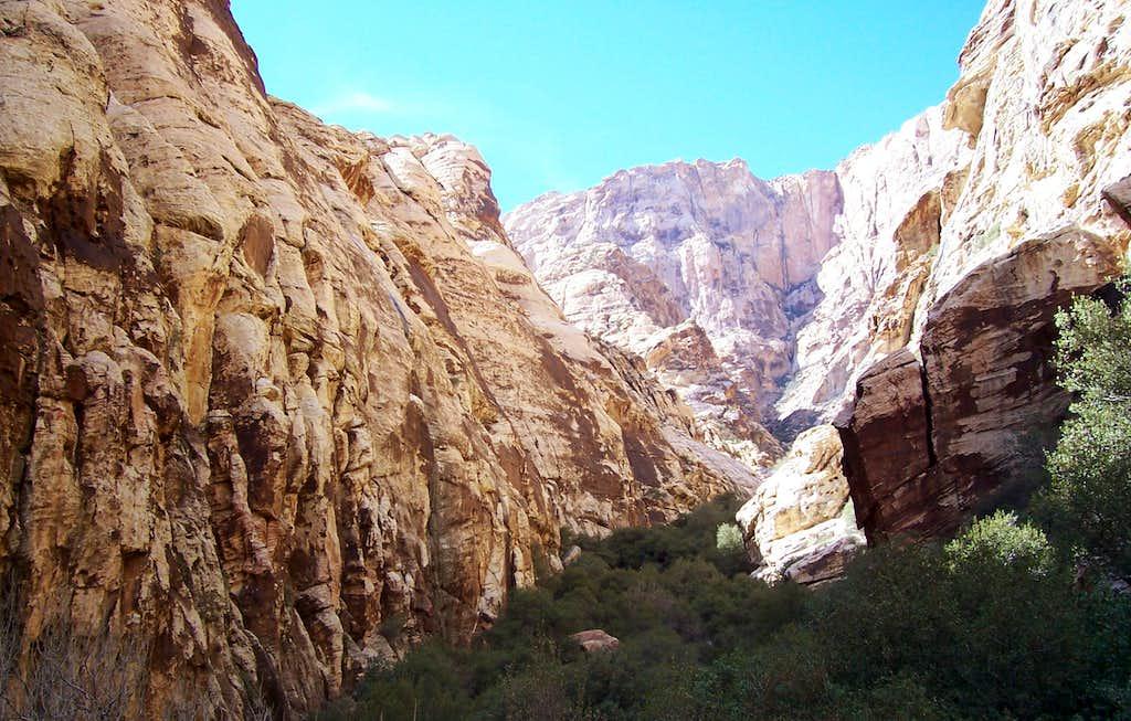 Fern Canyon, NV