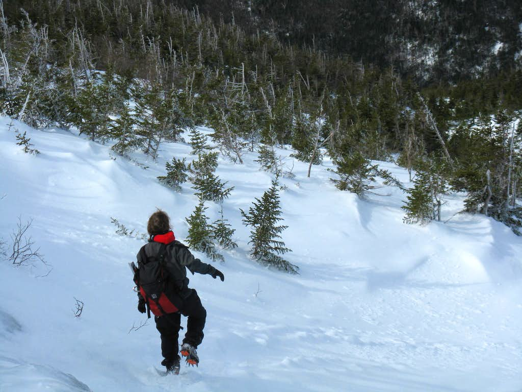 Down the Ammonoosuc Trail in Winter