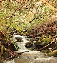 Great Smoky Mountain Brook