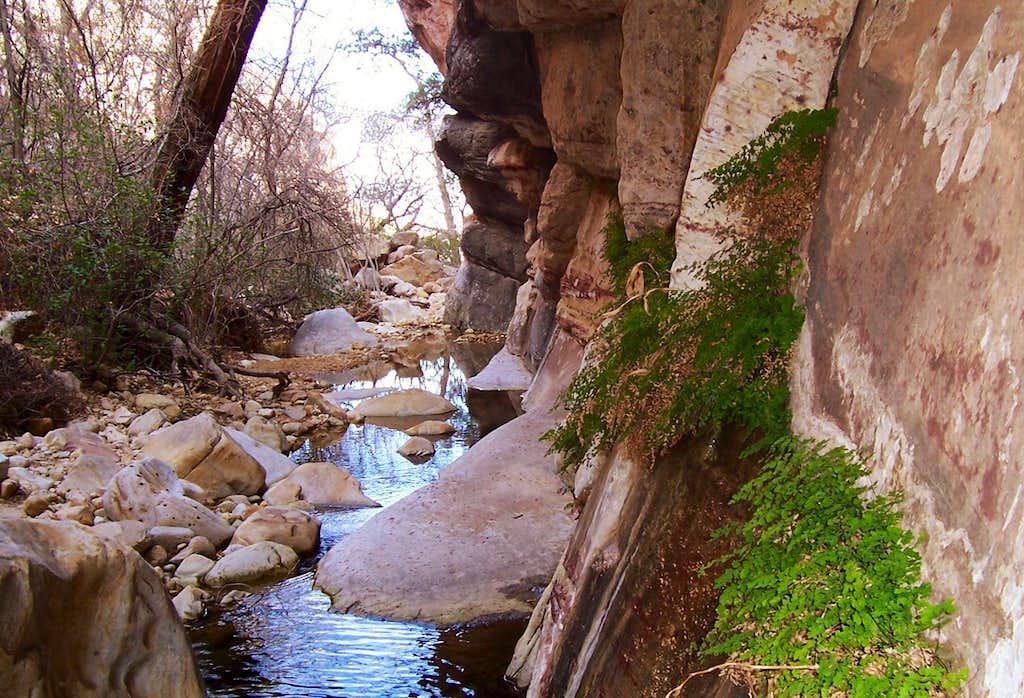 Red Rock Ferns