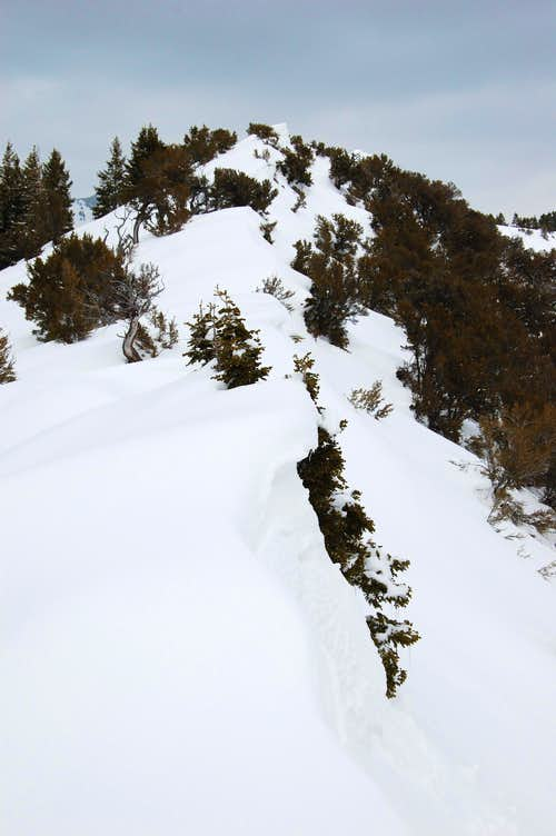 Little Black summit ridge.