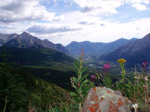 Centennial Trail Flora