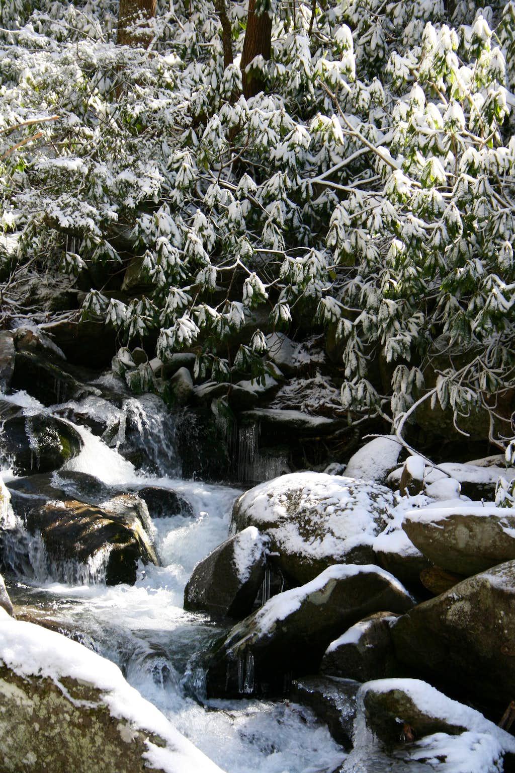 LeConte Creek in Snow