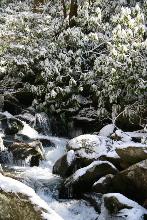 LeConte Creek in Snow