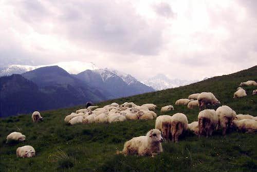 Rusinowa Meadow in Polish Tatras