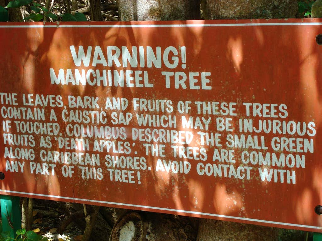 Manchineel Tree Warning