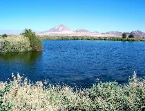 Mojave Desert Duck Pond