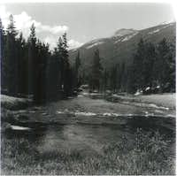 Along the Lyell Fork of the...