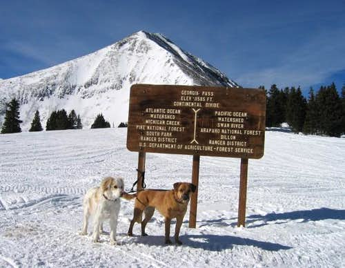 My dogs Ray and Sopris at the...