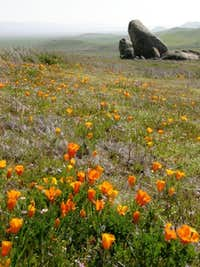 Selby Rocks & California Poppies