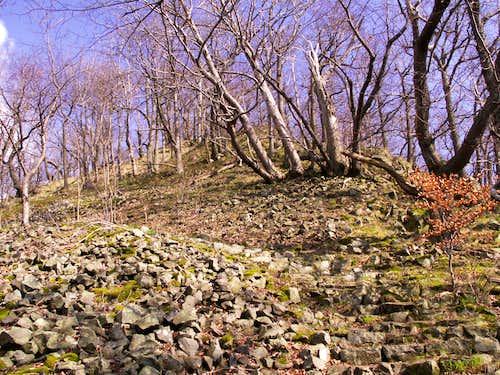 A dwarf forest...