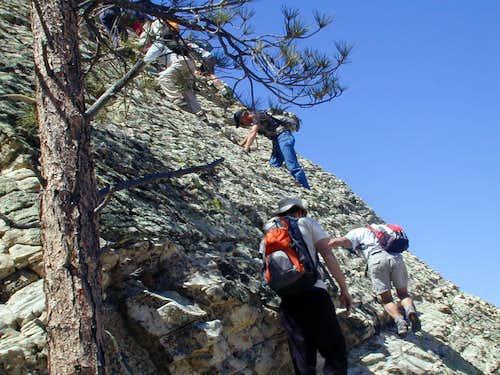 Tree marking ledge