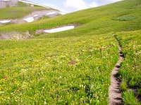 Weminuche Wilderness-July 07