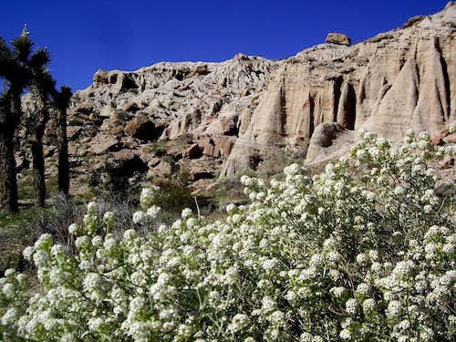 Flowers, Joshua tree and Red rock canyon