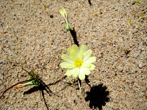 flower and sand