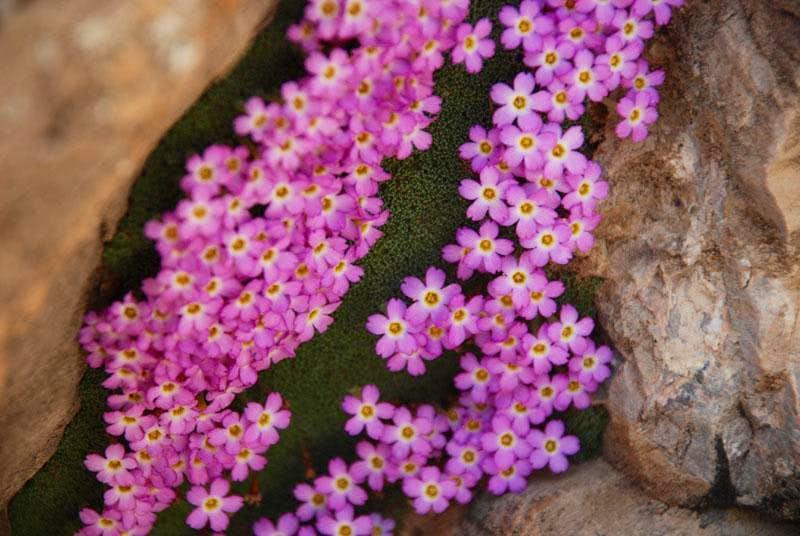 می عاشقونه عم ودفنه نماشا Flora of Iran