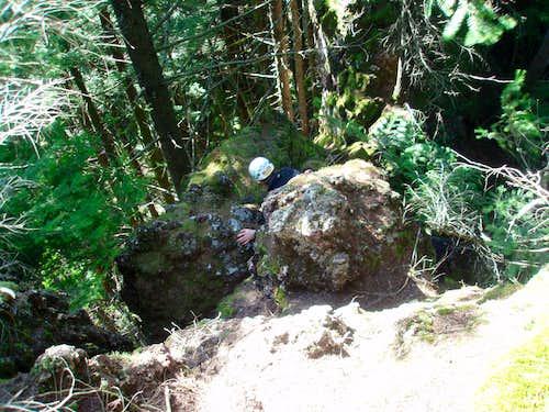 Climbing Big Cougar