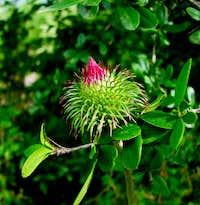 flower in alestan forest