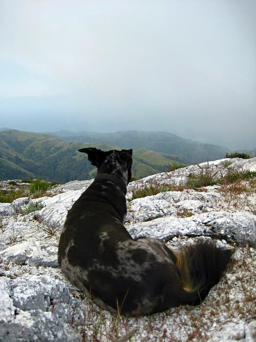 On the summit - Pico Blanco