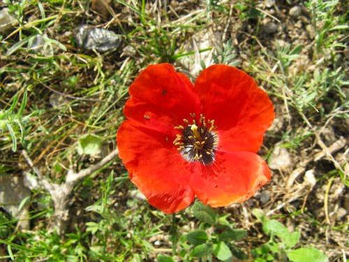 Mountain's flora