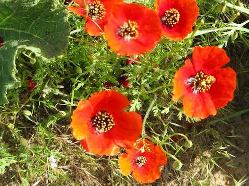 mountain's floras