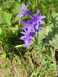 Beautiful Blue/Purple