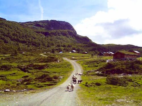 Tinden (982 m) and Grønahorgi (1166 m)