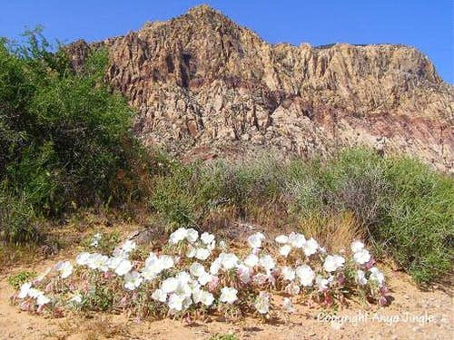 Indecision Peak