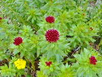 High altitude flora.