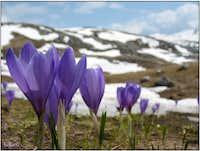 Spring on Bjelašnica