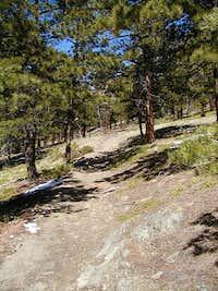 Open ponderosa pine forest