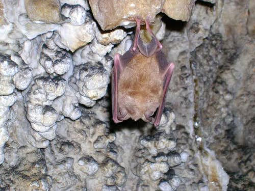 Bimarab Cave